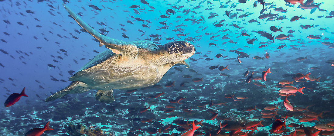 Travel To The Galapagos Islands Galapagos Island Vacation Package - Galapagos vacations