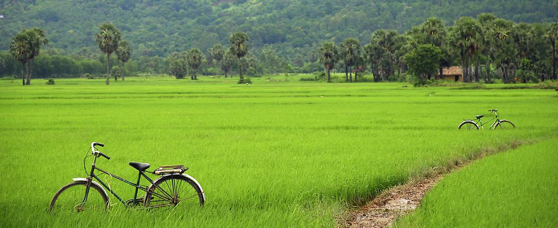 3fdfc814d Ho Chi Minh City panorama Rice paddies, Mekong Delta Ho Chi Minh Mausoleum,  Hanoi Vietnamese ...